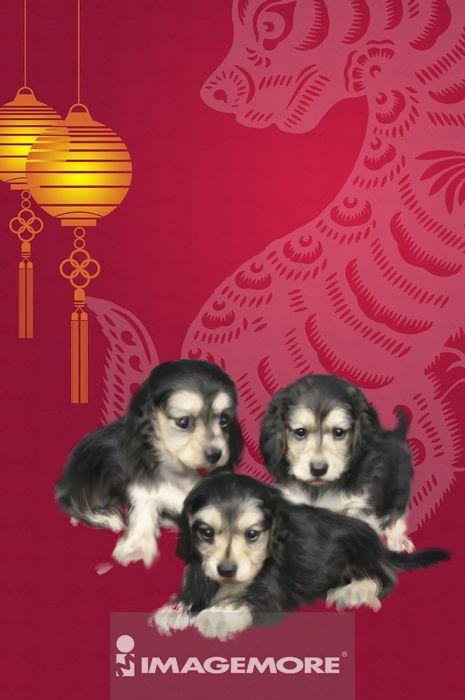 狗年,新年,春节,腊肠犬,