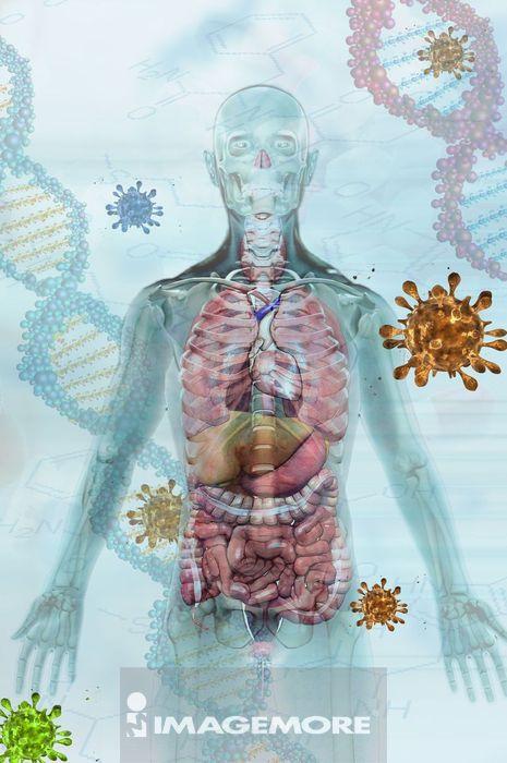 病毒与人体 免疫防御概念