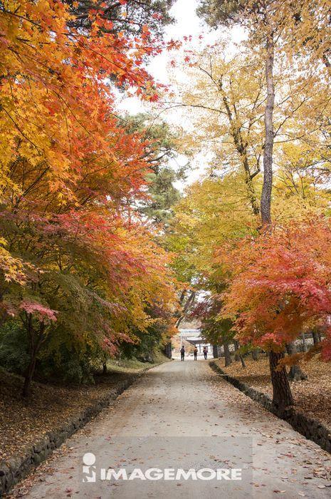散步道,海印寺,伽倻山国立公园,韩国,