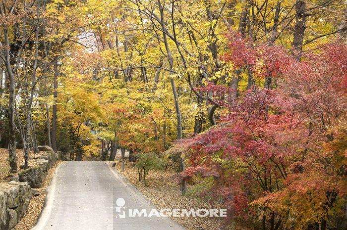 枫叶,海印寺,伽倻山国立公园,韩国,