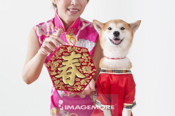 新年,春节,狗年,鞭炮,