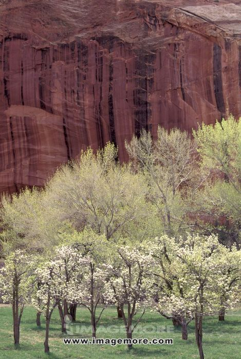 Red Cliffs Behind Fruit Trees