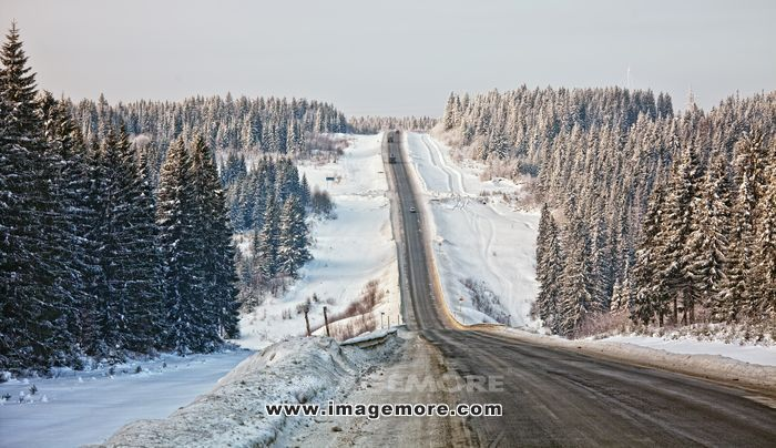 Frozen trees and snowy land road photo