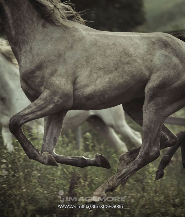 Picture of grey horse's body elements