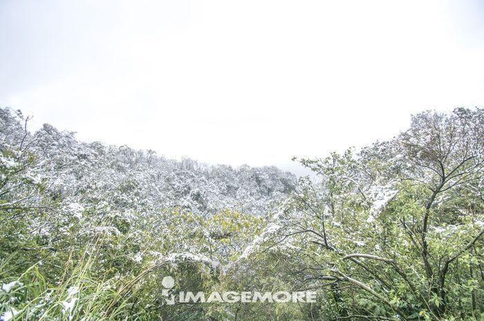 雪,雪景,冬天,