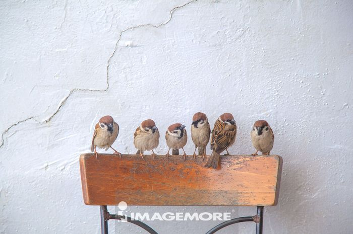 麻雀,鸟,