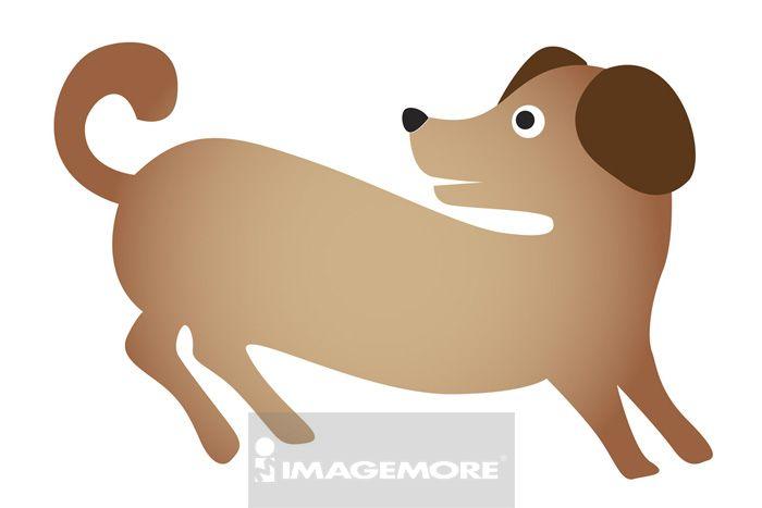 数码,一只动物,哺乳动物,动物主题,动物学,动物图案,可爱,白背景,拟人