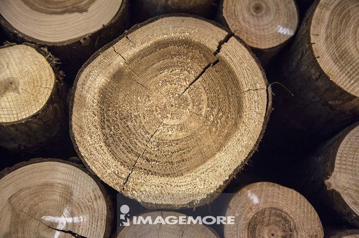 木头,木材,木纹