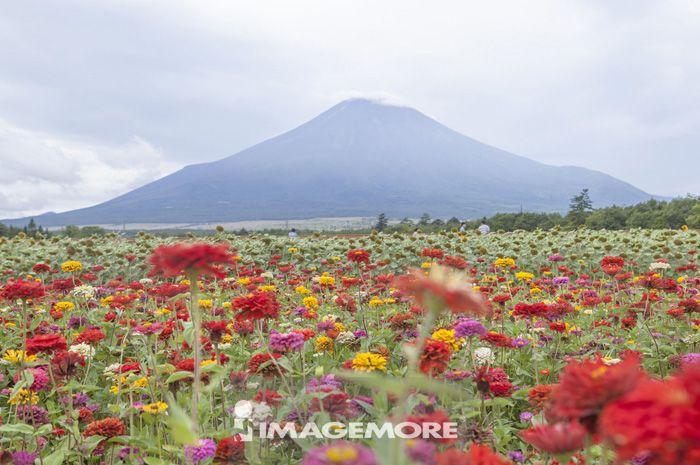 富士山,风景
