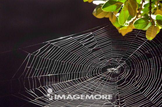 台湾,高雄,夜景,夜晚,黑夜,蜘蛛网