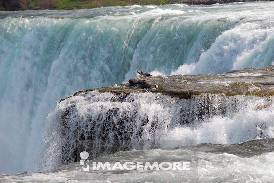 美国,尼加拉瓜瀑布