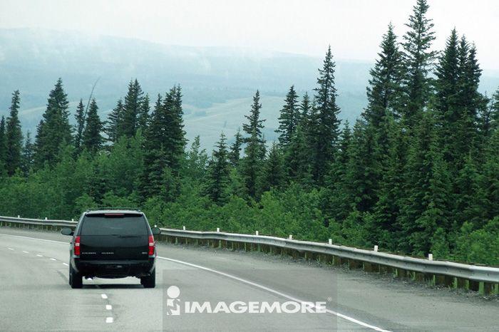 森林,树林,道路,车子
