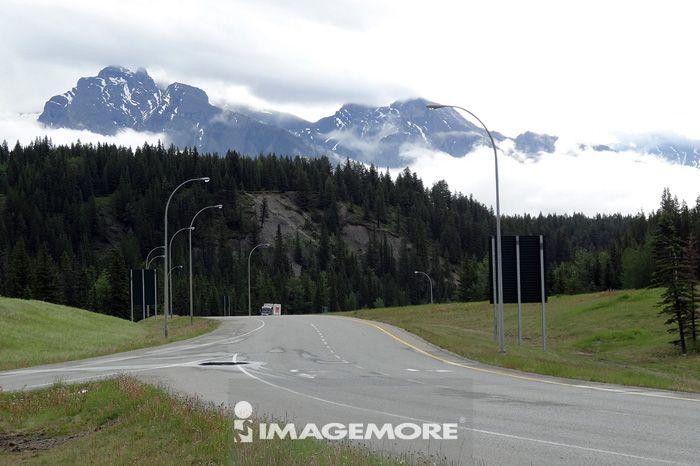森林,道路,车