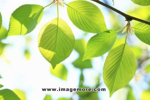 绿色,环境,清新,森林,叶子,植物,背景,自然,材质,光,新鲜,树,ps系列