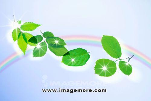 背景 壁纸 绿色 绿叶 设计 矢量 矢量图 树叶 素材 植物 桌面 500_334