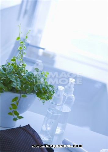 Potted plant and spray bottles