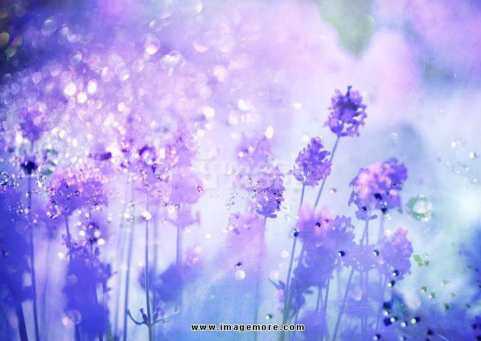 Glittering lavender image