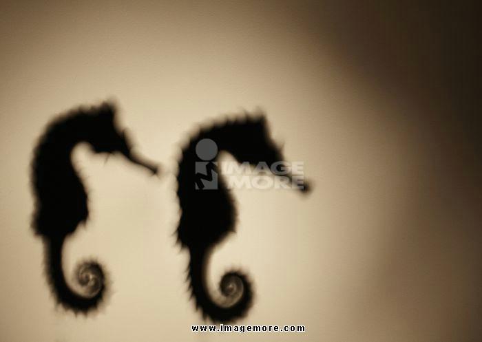 Silhouette of sea horse
