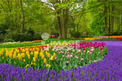 Keukenhof Gardens Near Alkmaar Holland