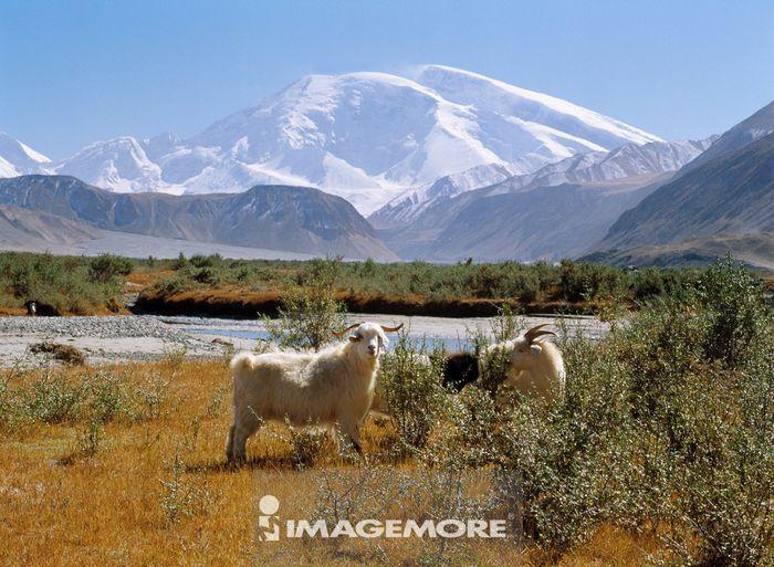 南疆,帕米尔高原
