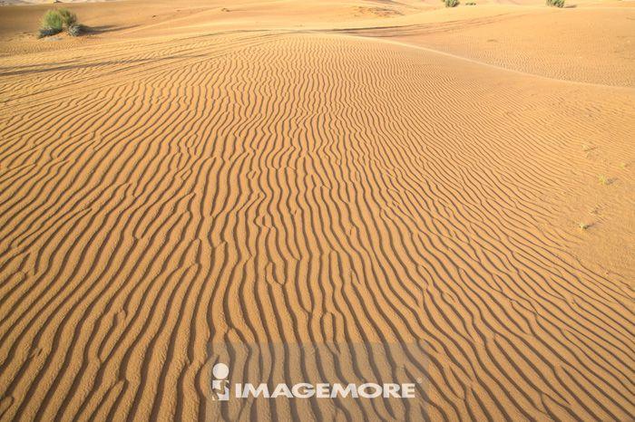 杜拜,阿拉伯联合大公国,亚洲,沙漠冲沙,