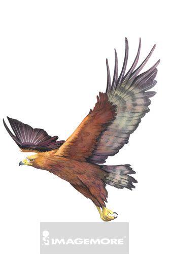 插画和绘画,创意,想法,水彩画,白天,无人,白背景,直图,一只动物,羽毛