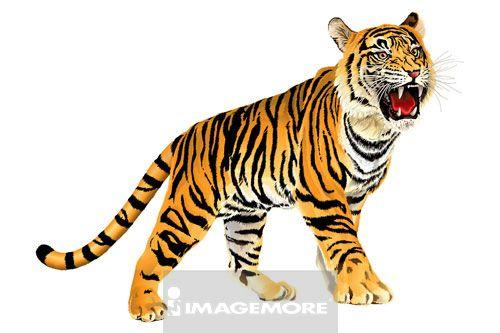 老虎简笔画彩色