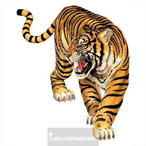 手绘彩色老虎图片